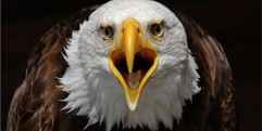 America has Grossly Sinned and Judgment is Coming up before the Holy Spirit